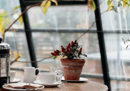 Дезинсекция для ресторанов и кафе в Экоз