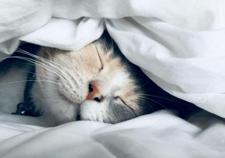 Куда деть кошку на время дезинсекции?