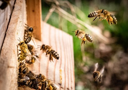 Куда мы отправляем пчел?